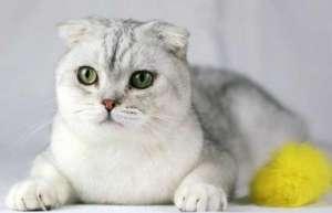 猫咪怀孕能洗澡吗?